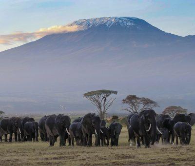 Le Kenya : une destination de choix pour un safari pas cher